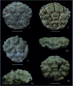 fossili di incontri assoluti