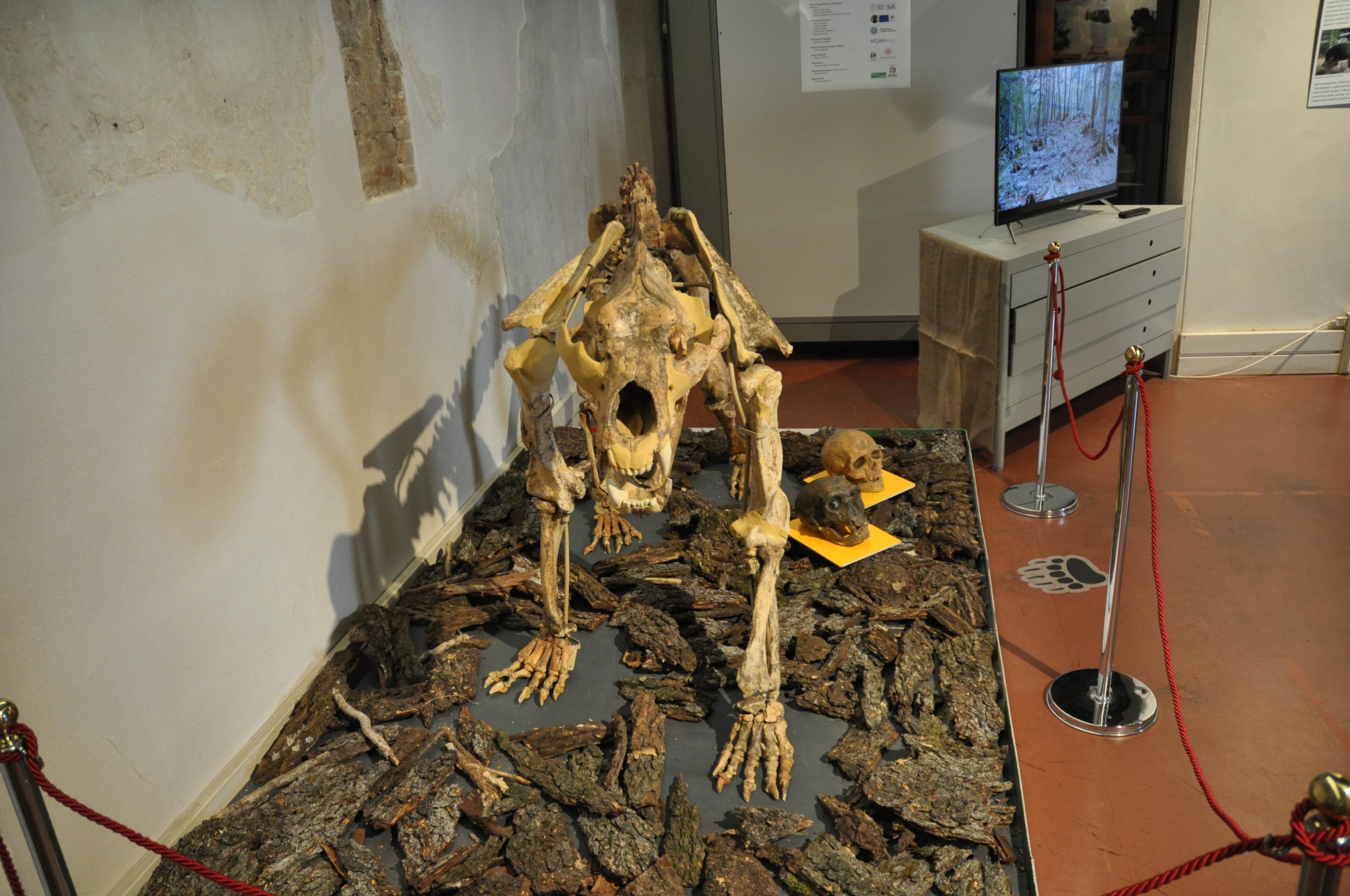 fossili di incontri assoluti Leggi di età datazione in Illinois